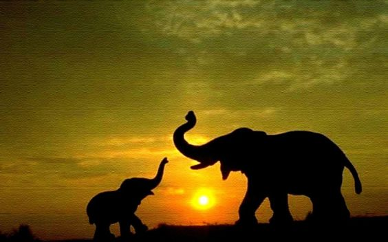 Elephant Wallpaper Elephant Wallpapers Elephant Hd Wallpapers