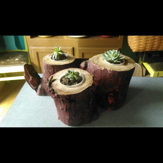 Aspen Log Planter, succulent planter, cactus planter, rustic wedding, centerpiece, herb garden