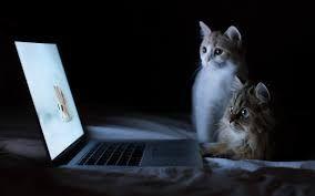 Wallpaper Hd Laptop 4k Cat Wallpaper Animal Wallpaper Funny Wallpapers