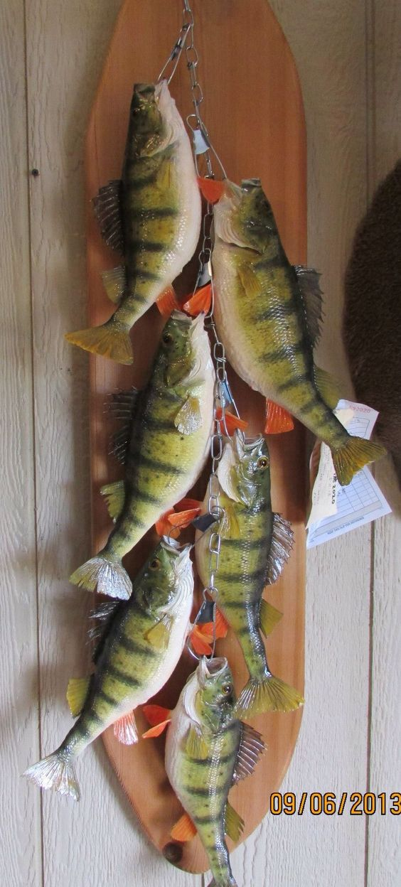 Perch Stringer Mount On Backboard Fish Taxidermy Pinterest