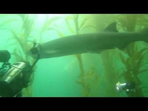 Scuba Diver Girls Go Shark Diving in California