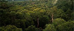 Amazon Manaus forest.jpg