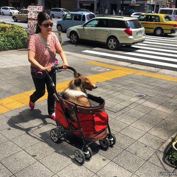 что удивляет? обычная коляска для собак!(парализованных после операций и тд)