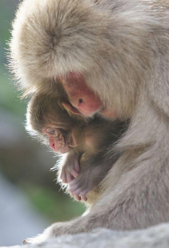 Mother and Newborn baby 2014 by Masashi Mochida - Photo 69222329 - 500px