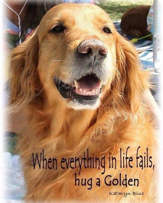 And Your Family Retriever Puppy Golden Retriever Quotes Dog Quotes