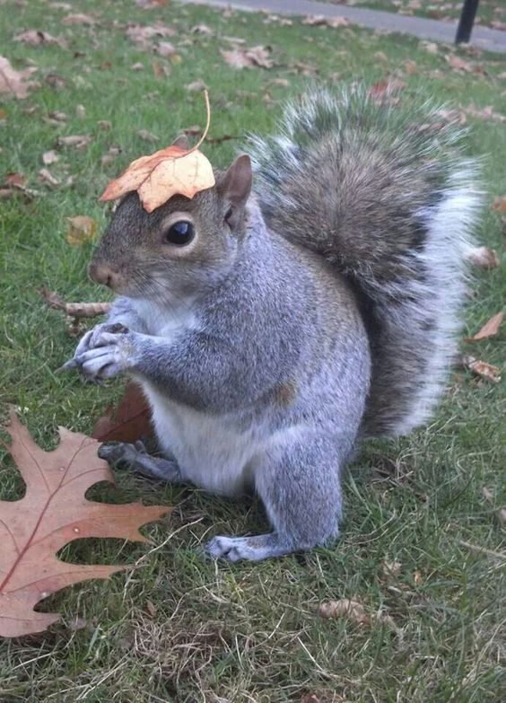 Midwestern State Squirrel Campus Squirrels Pinterest - Student befriends campus squirrels then dresses them in the cutest outfits ever