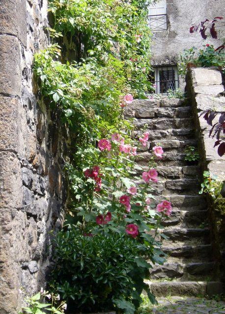 Roses trémières sur les marches à Salers dans le Cantal: