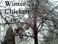 Winter Chicken Care @ Farming My Backyard
