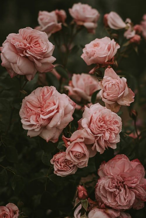 Flowers 100 Best Free Flower Petal Plant And Pink Photos On Unsplash Beautifulflowers Flower Background Wallpaper Flower Aesthetic Flower Phone Wallpaper