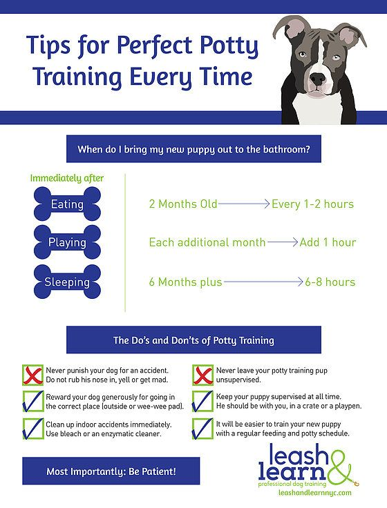 Private Puppy Training Nyc Puppy Potty Training