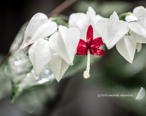 Bleeding Heart picture jewel tone decor by MicheleMPhotography