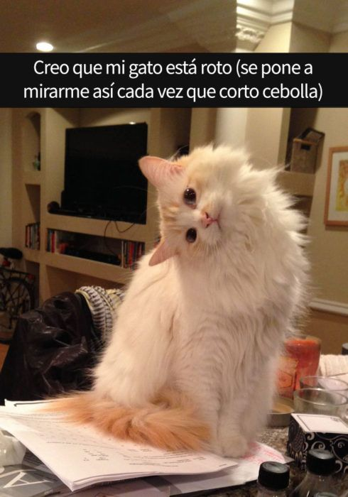 gato doblado