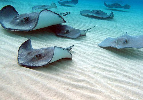 I swam with Stingrays and fed them squid.