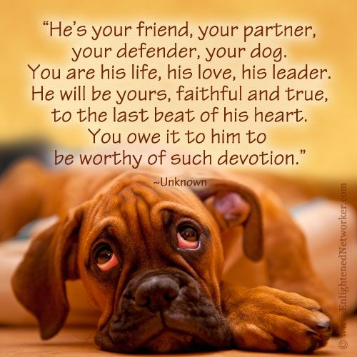 One of my favorite dog quotes. #quotes #dogs #boxers: