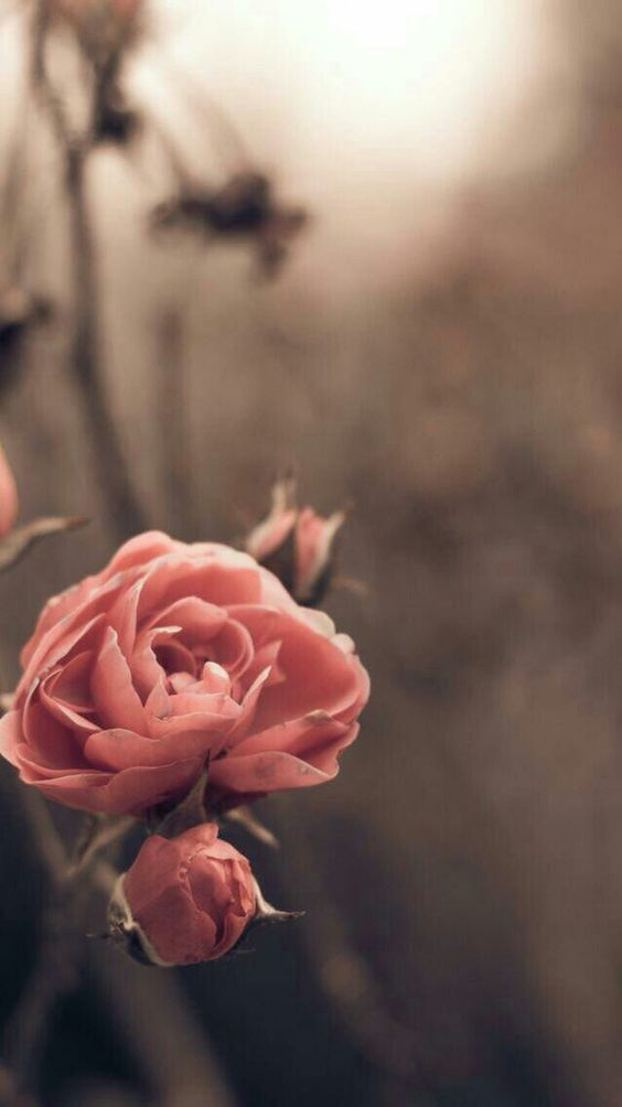 The Your Rose Flower Wallpaper Watercolor Wallpaper Iphone Nature Wallpaper Coolest flower iphone wallpaper