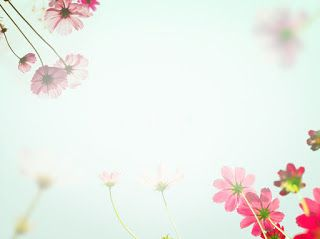 صور خلفيات بوربوينت 2021 اجمل خلفيات Powerpoint Cosmos Flowers Textured Background Stock Images