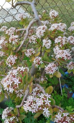 #flores no #inverno