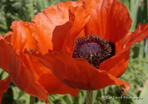 ....and wrap myself in Poppy-silk, with dancing, magic tassels too!