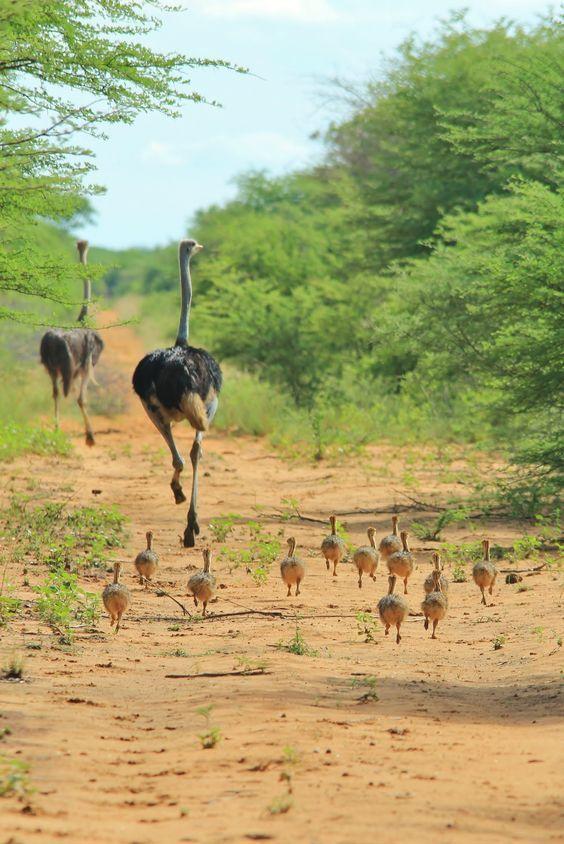 Animal On Earth Travel Adventure Vacation Holiday Travelphotography Tour Tourism Flight Easyjet Trips Overseast Nature Animals Animals Wild Animals