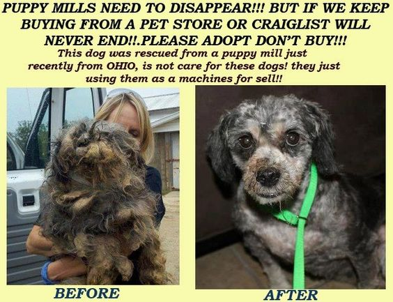 Stop Buying From Pet Shops Breeders And Craigslist Living In A Cage Pumping Out Puppies Is Not A Life Puppies Dogs Pets