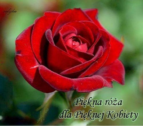 Podobny Obraz Beautiful Rose Flowers Beautiful Roses Rose Flower