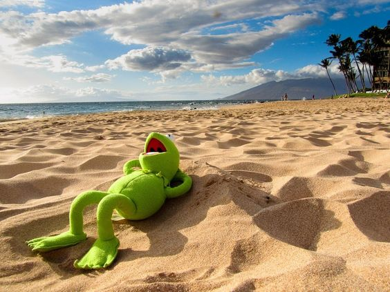 Kermit the Frog's Kickass Vacation in 15 Epic Photos