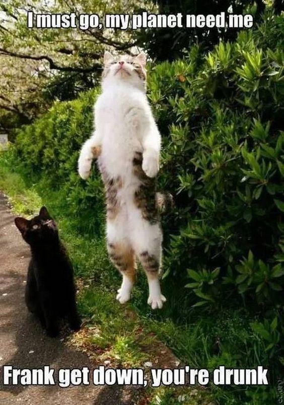 b8f68b3e934e0816459f6ab1d58ebabb cats humor funny cats funny cats pinteres,Get Down Cat Meme