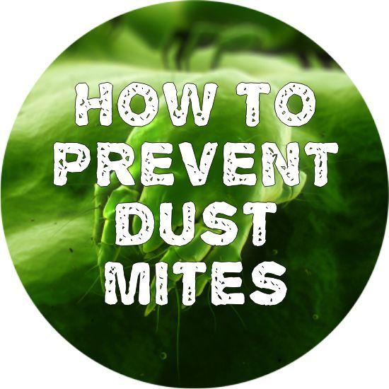 how to prevent dust mites sleepys sleepys pinterest dust mites. Black Bedroom Furniture Sets. Home Design Ideas