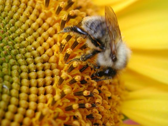 HONEY BEE: Bees I Ness, Bees Sweetness, Bees Honey, Bees Pink Houses Bees The, Bees Spoke