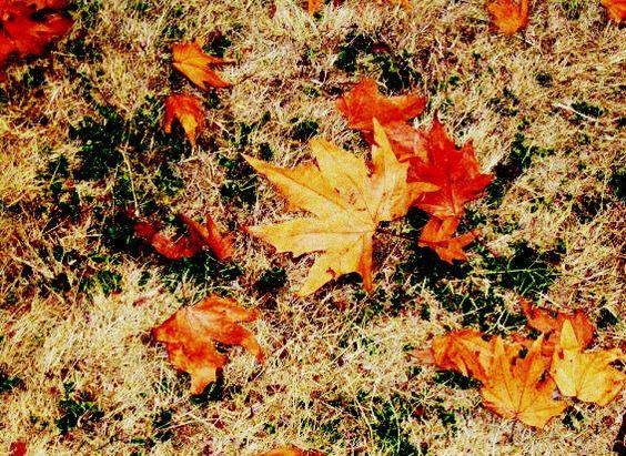 إلى الخريف./John Keats/ ترجمة سليمان ميهوبي
