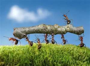 ants, they are such hard workers.