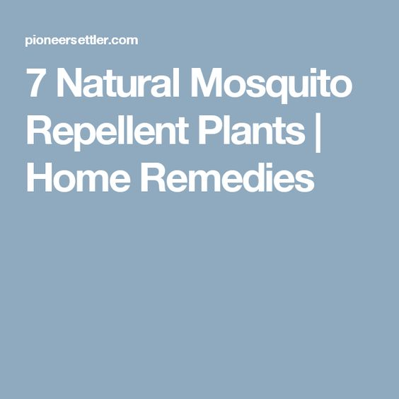 7 Natural Mosquito Repellent Plants   Home Remedies