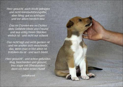 Traurige Menschen Bilder Gedicht Uber Hunde Spruche Bilder Zitate Bilder Und Animals Corgi Jack Russell