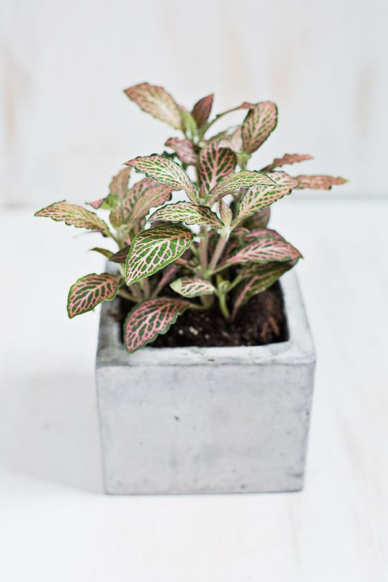 Pinterest the world s catalog of ideas for Low light non toxic house plants