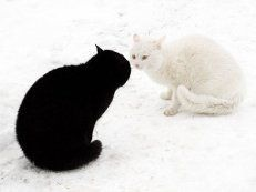 черное и белое картинки - 841 тыс. картинок. Поиск Mail.Ru