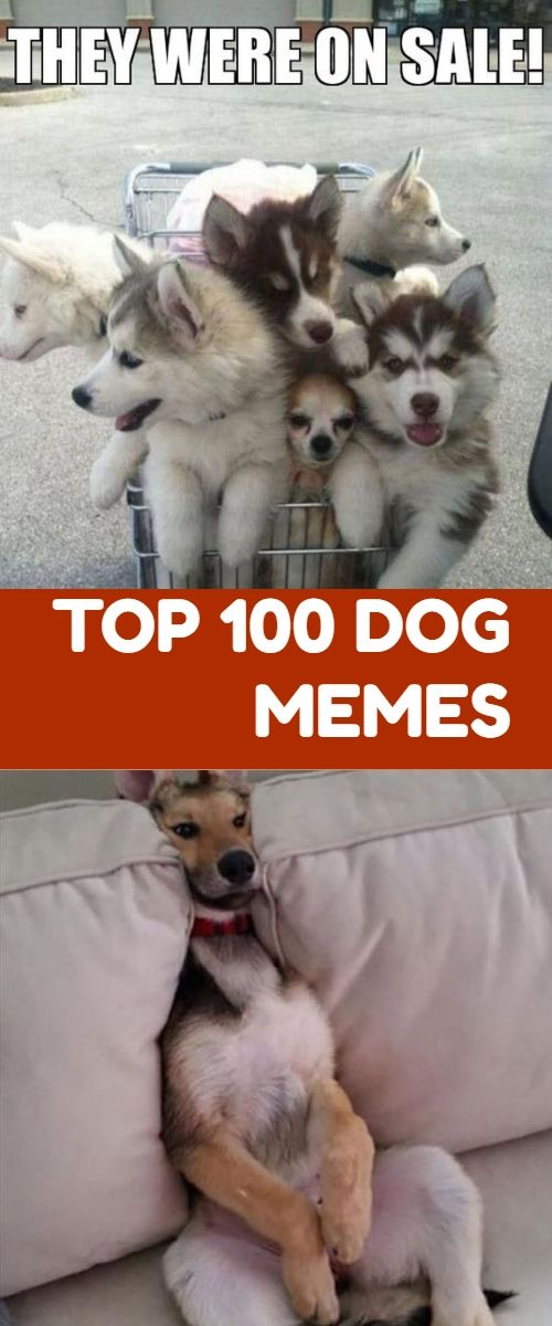 Happy Dog Memes Humor Funny Do You Love Dogs Well You Will Surely Enjoy These Super Hilarious Latest Funny Memes Abou Funny Dog Memes Dog Memes Funny Babies