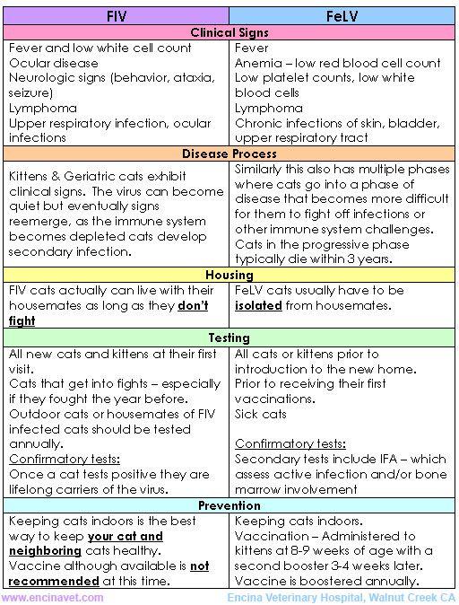 Feline Leukemia (FeLV) and Feline Immunodeficiency Virus (FIV)