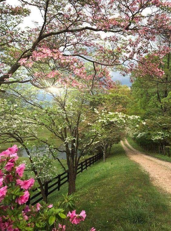 If This Isn T A Magical Sight I Don T Know What Is Spring Landscape Photography Spring Scenery