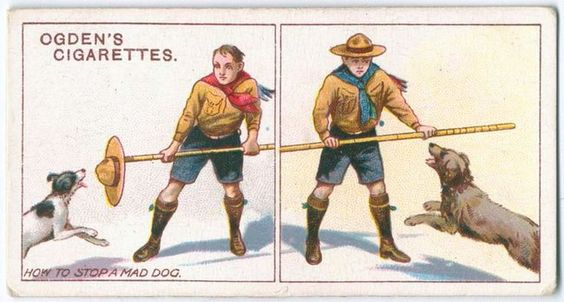 """FROM GALLAGHER CIGARETTES: How To Stop A Mad Dog: """"A scout's staff, a walking-stick, or even a handkerchief or hat may be held before you as shown. The dog invariably endeavours to paw down your defense before biting, thus giving you the opportunity of disabling him by a kick."""" [Trade Card]"""