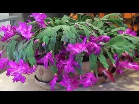 Jak Dbac O Grudnika Cz 2 Youtube Flowers Garden Flora