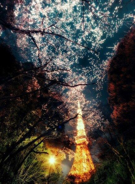 Sakura with Tokyo tower lit up