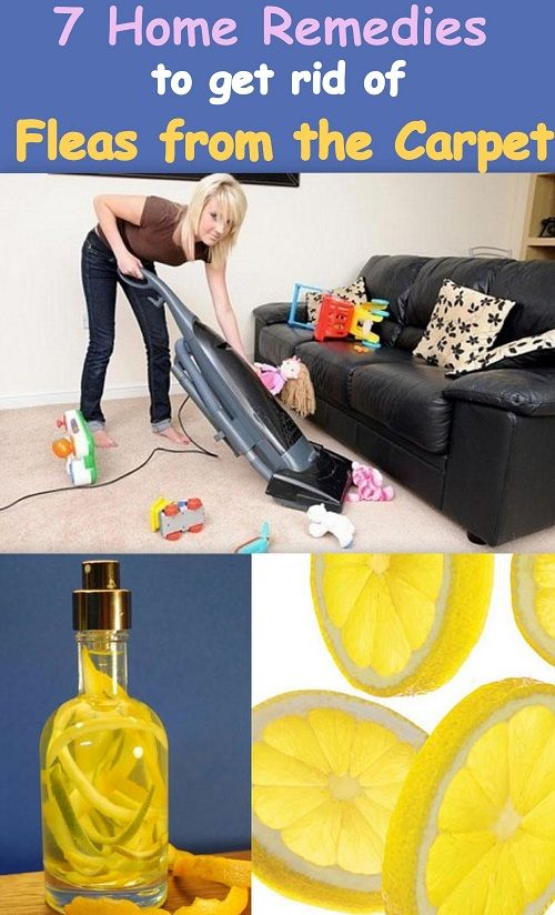Fleas Home Remedies And Remedies On Pinterest