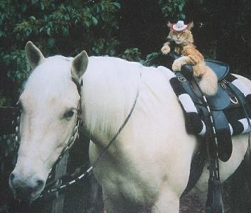 Cat-Riding-a-Horse...even wearing a cowboy hat   Horses ...