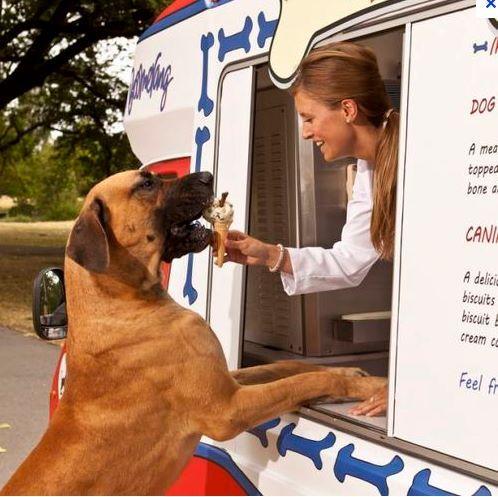 Doggie ice cream truck