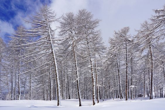 Inverno quando finirai? by marioclara #nature #travel #traveling #vacation #visiting #trip #holiday #tourism #tourist #photooftheday #amazing #picoftheday