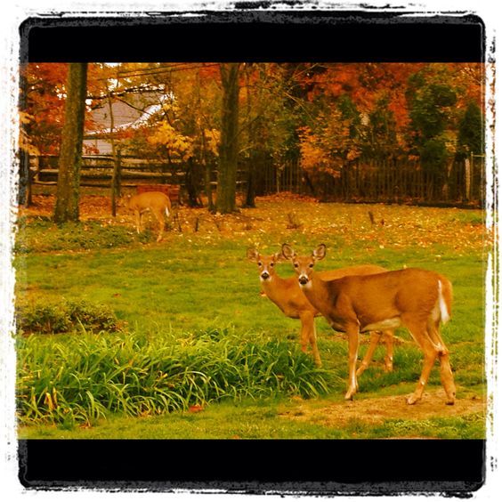 I love everything about this picture i took this fall for Deer scenery