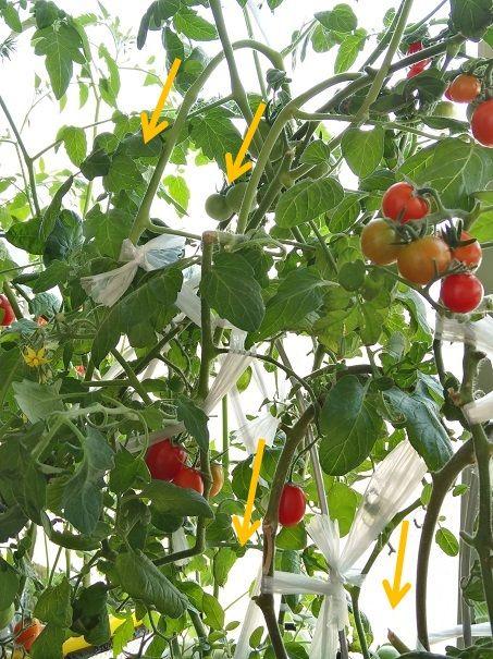 ボード 水耕栽培 野菜 のピン