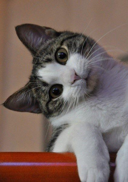 curious kitten.: