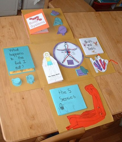 Body Systems Foldable - perfect for Life Skills