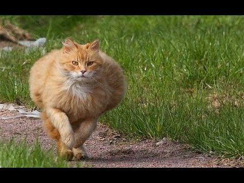 Drift de Gatos